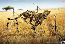 Creative ads / Check this out! https://www.facebook.com/media/set/?set=a.541193159235256.1073741827.146268132061096&type=3