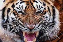 Animals | Wild