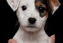 Puppies <3 / by Alejandra Jiménez