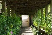 Italian garden / Villa Medici de Fiesole