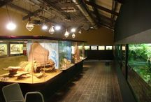 Reptile room / Ideas for future reptile room .