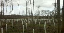 The Ash Woodland Case Study / Works during and after to manage five hectares of woodland to better withstand ash dieback.