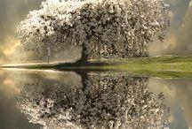 Flowers<3 / by Melissa Bolinger-Bushee