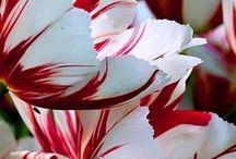 Fiori / Mi amo fiori