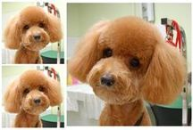 All About Dog Grooming / Dog grooming tips, trivia, and impressive doggie hairstyles!