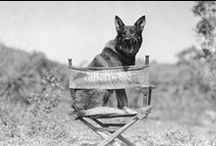 History's most famous dogs / When talking about History, we usually forget about the canines that helped shape it. Learn about History's most famous dogs for interesting dinner conversation!