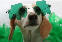 Saint Patrick's Day dogs / Pictures of dogs in the Saint Patrick's Day spirit!