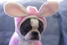 Easter dogs / Dogs in bunny ears, dogs celebrating  Easter... Find all your dog related Easter content here!