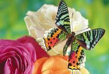 Butterflies and Dragonflies / butterflies and dragonflies / by David Shell