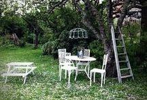 Garden / Garden beauty