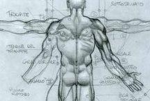 Simone Bianchi Anatomy