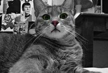 Macska | My kitty Zsini ♥ A drága Zsini / A legkülönlegesebb különc macska ♥