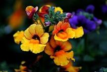 My photographs- Flowers