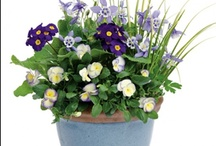 Spring Container Ideas / Mix it up this spring - add some pizazz to your pansies!