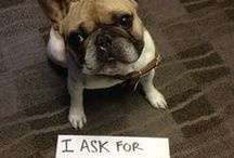 """DogShaming レ O √ 乇 ♥ / Dog shaming is the name given to the activity where a dog owner creates a sign to describe a negative activity that the dog has participated in. For example, the sign might read """"I dug a hole in the carpet"""". The sign is then either hung around the dog's neck, or placed next to the animal and is photographed and published on the internet  #dogshaming"""