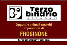 FROSINONE / Oggetti e animali smarriti in provincia di Frosinone