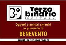BENEVENTO / Oggetti e animali smarriti in provincia di Benevento