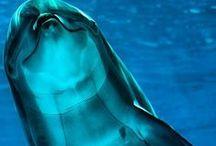 Under the Sea ☸☸