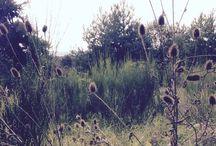 My Pictures / Garden