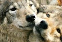 wolves, dogs and other pets.
