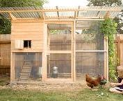 C H I C K E N C O O P / I need ideas and help to look after my chickens.