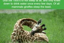 I N T E R E S T I N G F A C T S / Facts that I find interesting :)