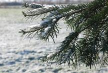 Der erste Schnee 12 | 2012