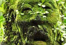 Gardening / Gardens and nature.