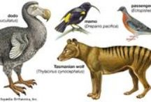 Extinct Species / Extinct species whose extinction was influenced by man.