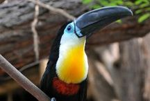 Birds of the World: South America / With over 3,000 species, South America is home to the most diverse variety of bird species in the world.