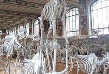 Hall of Bones / Various Creature Skeletons