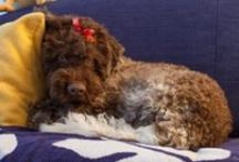 Bubu / My little buddy Bubu the doggy