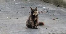 Cats from Around the World / Cats encountered on our trips around the world.