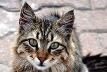 Kitty:-)