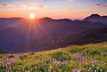 Meadows & Wildflowers