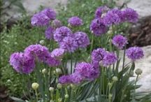 Perennials that need full sun / by Debbi Thompson
