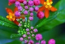 Fabulous Flowers / by Jan Eastwood