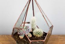 {simple home} terrarium