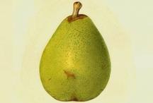 Green pear - 2013 colour