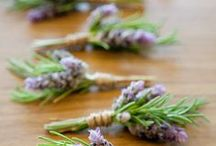 all things herbie & plantie