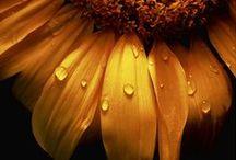 Pory Roku & Natura / Seasons & Nature