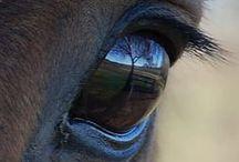 Horses' Details