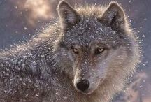 Wolves / Second favorite animal...