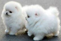 Mimimi animals <3