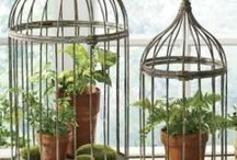 Decor ~ Bird Cages