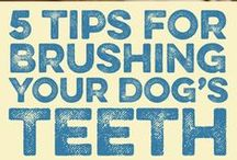 Daily Pet Care Tips / Tips and tricks to make taking care of Fido a little easier.