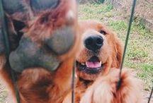 Dog Funnies / A silly dog is a happy dog!