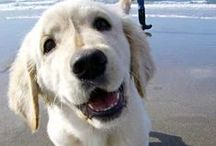 Summertime Happiness / Summer fun with your dog!