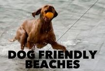 Dog Dates / Things to do with the 4-legged love in your life!