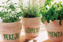 Mi pequeña huerta de hierbas I : Ideas / by Vik Casas